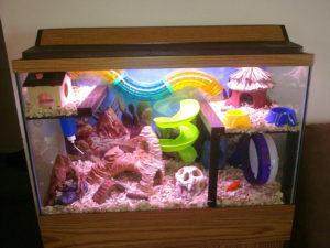 hamster-aquarium