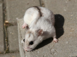 Hamster au soleil !
